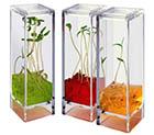 მცენარეები კოსმოში